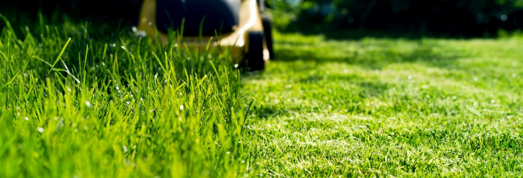 all-seasons-maintenance-summer-lawn-care